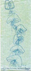 foto-10-medusa-angeles-alvarino-1